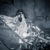 Chicken lay egg